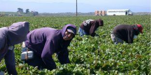 Работа за границей: как не попасть в трудовое рабство