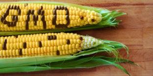 Продукты с ГМО становятся заметнее