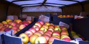 На рынке в Оренбурге выявлены санкционные фрукты - почти 400 кг