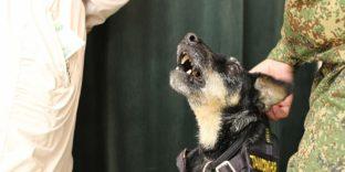 Служебные собаки выявили нарушения