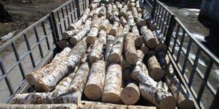 Более тонны бревен пыталась незаконно вывезти в Китай российская компания