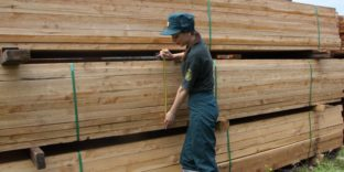 Контрабанду пиломатериалов стоимостью свыше миллиона рублей пресекла Биробиджанская таможня