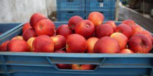Запрет на импорт фруктов из Китая с 10.08.19 введен Россельхознадзором