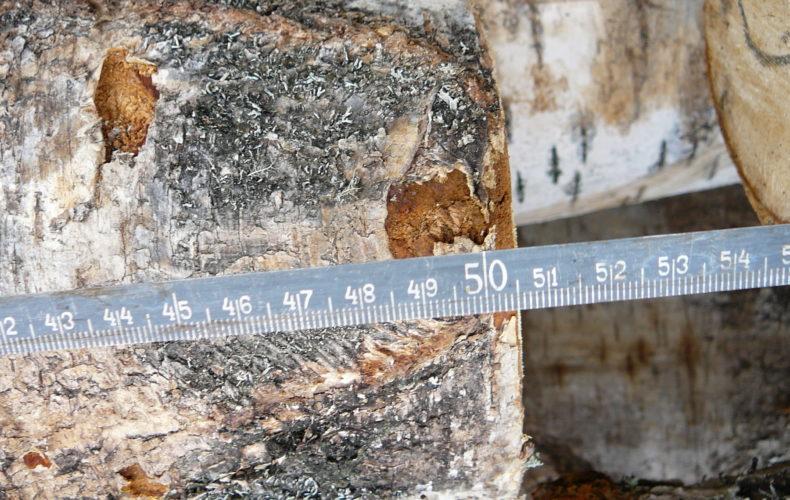 Недостоверное декларирование при вывозе лесоматериалов в Китай выявили сотрудники Нижегородской таможни