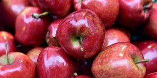 Санкционные яблоки (800 кг) изъяты со склада в Красноярске