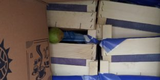 Смоленские таможенники задержали 60 тонн груш, перемещаемых с сокрытием