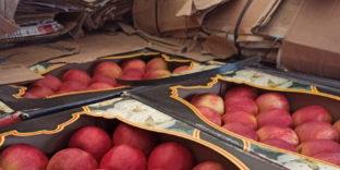 Смоленские таможенники задержали 2 автомобиля с 40 тоннами фруктов, «замаскированными» под лимонад и макулатуру