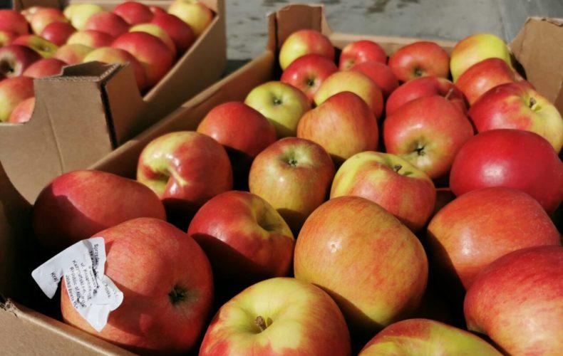 Санкционные польские яблоки задержаны в Большечерниговском районе Самарской области