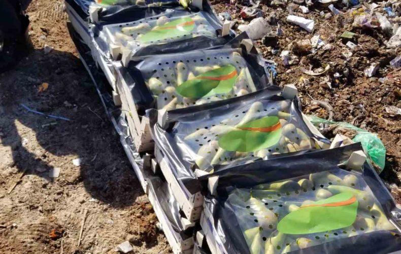В Ижевске выявили 278 кг санкционных груш