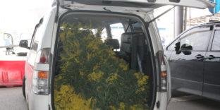 На российско-абхазской границе пресечен незаконный ввоз крупных партий цветочной продукции