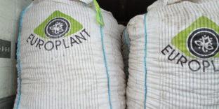 На границе с Казахстаном задержано 60 тонн санкционного картофеля