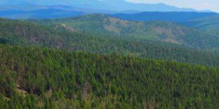 Невозвращение более 352 млн рублей за проданный лес выявила Бурятская таможня