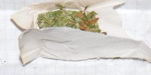 Служебная собака обнаружила наркотик на судне в порту Находка