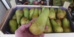 Смоленские таможенники задержали 60 тонн фруктов из списка продуктового эмбарго