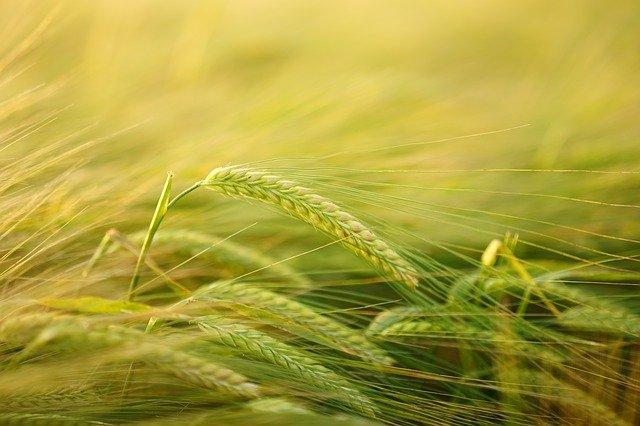 Совещание по развитию селекции и семеноводства в ЕАЭС [12.04.21]