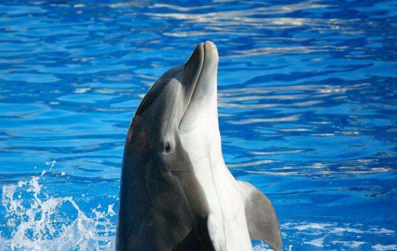 Южной оперативной таможней выявлен факт незаконного перемещения дельфинов в Королевство Марокко
