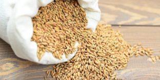 Краснодарские таможенники выявили факт незаконного вывода за границу более 500 млн рублей на фиктивных поставках зерна