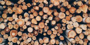 В 1 квартале 2021 г. в сравнении с аналогичным периодом 2020 г. объемы экспорта леса в стоимостном и физическом выражении снизились.