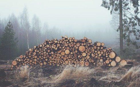 Красноярские таможенники выявили факты контрабанды лесоматериалов на 10 млн рублей