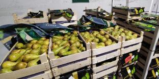 Брянские таможенники пресекли ввоз в Россию санкционных фруктов