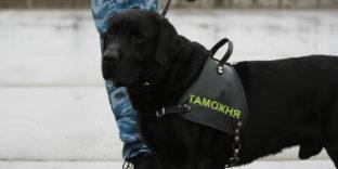 Служебные собаки стали помогать мобильным группам таможен в 2,5 раза чаще