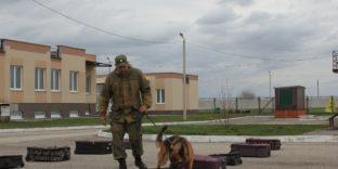 На базе Самарской таможни прошли соревнования специалистов-кинологов со служебными собаками Приволжского региона