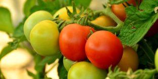 В ЕАЭС примут совместные меры по пресечению распространения новых заболеваний растений