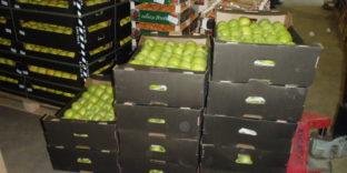 В Ижевске изъяли из торгового оборота 175 кг немаркированных яблок