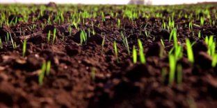 В ЕЭК обсудили вопросы сохранения здоровья почв