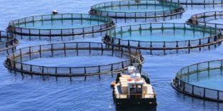 Устойчивое развитие аквакультуры – на повестке дня стран ЕАЭС
