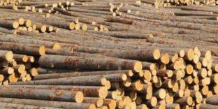 С 1 января 2022 года некоторые виды необработанных лесоматериалов можно будет экспортировать в Дальневосточном регионе только через ЖДПП Хасан